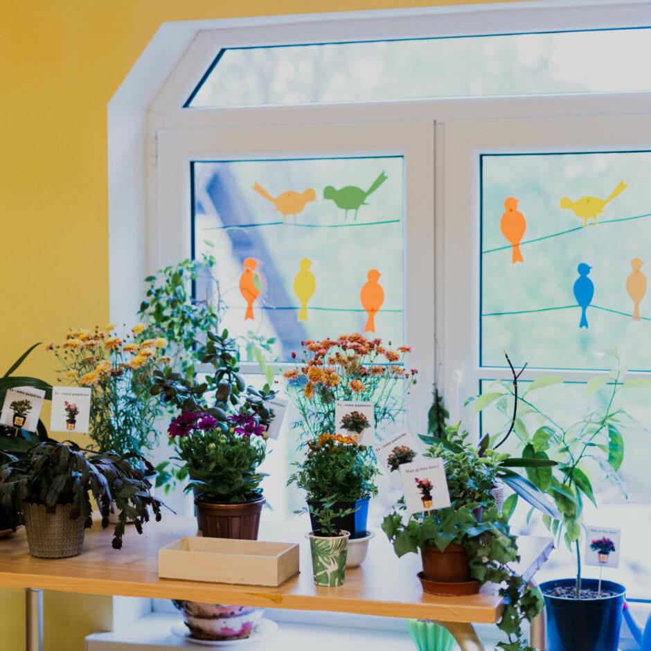 Dabaszinību stūrītis ar istabas augiem un laistīšanas piederumiem.